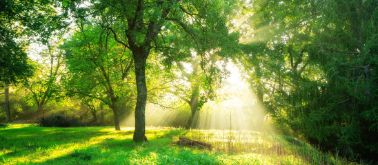 Foto op Canvas Bomen Green forest landscape background at sunrise.