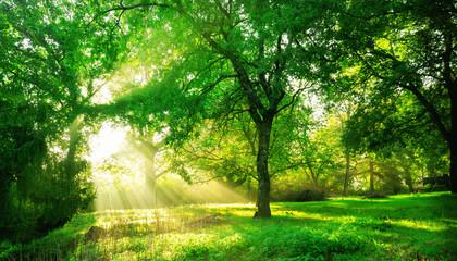 Green forest landscape background at sunrise.