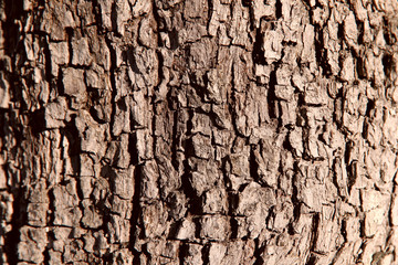 Image of tree bark. Brown color, close-up, isolated, cropped shot. Background and texture.