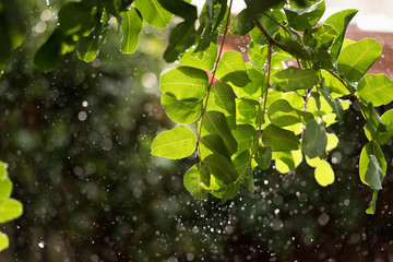 Heavy rain over green tree backlighted with sun.