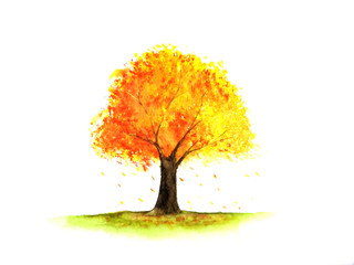 watercolor tree autumn season.yellow,orange and red leaf.isolated white background.