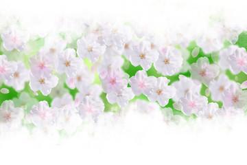 Wall Mural - 桜と新緑(ソフトなイメージ)