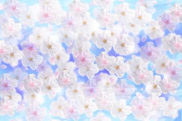 Wall Mural - 桜と青空と風(ソフトなイメージ)