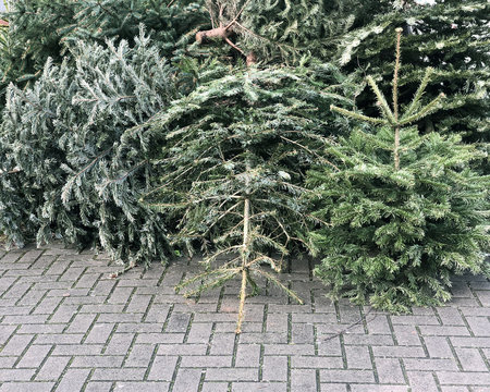 discarded christmas trees piled on pavement for trash collection in Germany