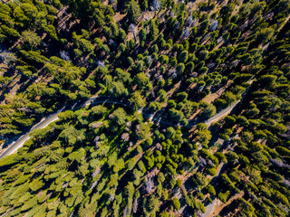 Aerial top view forest, Texture of forest view from above. Huge sequoia trees.