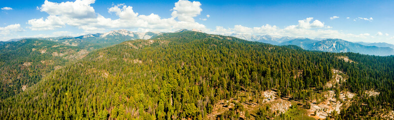 Wild sequoia forest landscape photographed from drone. Aerial view of European forest and meadows.
