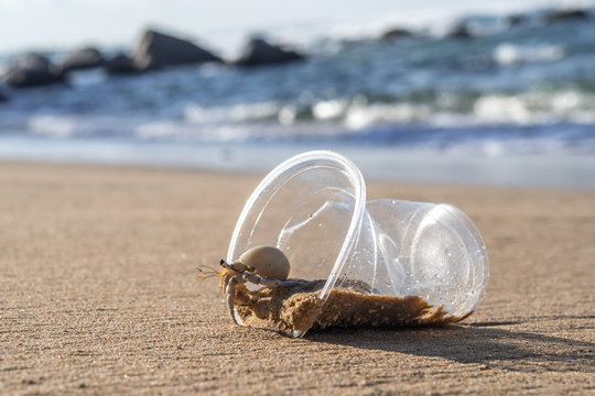 Hermit Crab living at polluted beach
