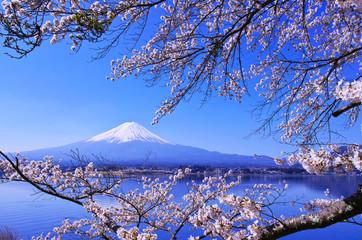 河口湖北岸から見る満開の桜と富士山