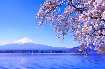 Papiers peints Fleur de cerisier 河口湖北岸から見る満開の桜と富士山