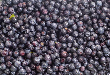 blueberries, a lot of blueberries, berries