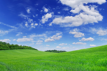 Wall Mural - Idyll, view of green fields and blue sky with white clouds