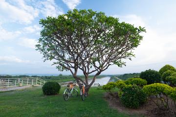 vintage bicycle in nature