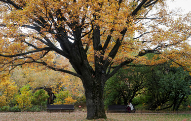 A woman sits on a bench at Moscow State University's Botanic Garden (Apothecary Garden) in autumn foliage in Moscow