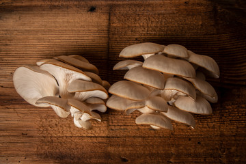 Oyster mushrooms - Pleurotus ostreatus close up