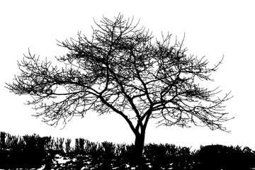 Realistic tree silhouette in winter (vector illustration) .
