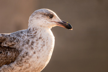 Young seabird