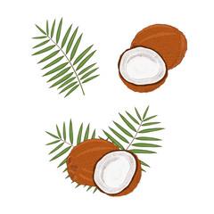 Coconut. Tropical Fruit. Sketch .Set