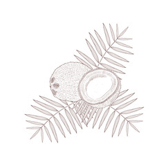 Coconut. Sketch, doodle. Monochrome.