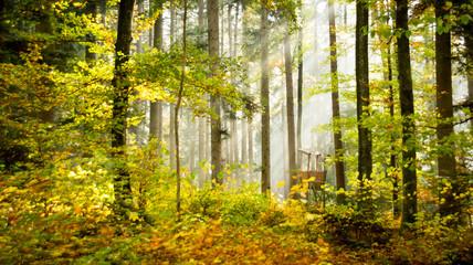 Waldmotiv mit Jägerhütte