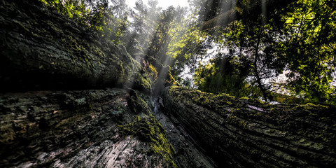 low angle view of deep forest trees. nature green wood sunlight backgrounds.