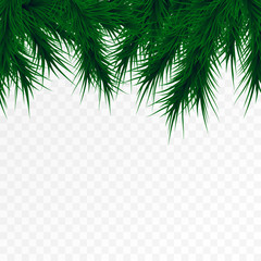 Vector christmas tree branches on white background. Pine tree decoration template. Christmas frame illustration, space for text.