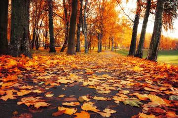 Autumn picturesque landscape. Autumn trees with orange foliage in October park