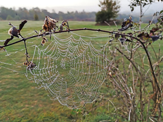 Spider web on a branch in front of green meadow and gray sky