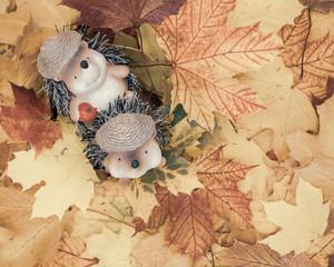 niedliches Igel Paar in Ahornblättern.