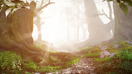 path through magical forest at sunrise, beautiful old trees fantasy landscape