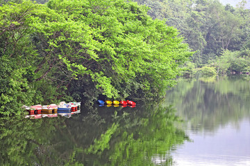 Kayaking and pedal boating water sport vessels for rent anchored in tranquil and picturesque lake in Kerala, India glade