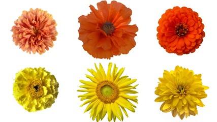 Collage of yellow and orange garden flowers: sunflower, rudbeckia, marigold, poppy, chrysanthemum, zinnia