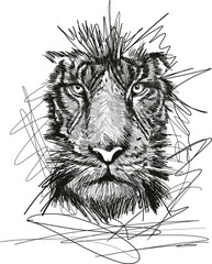 Sketch of tiger face