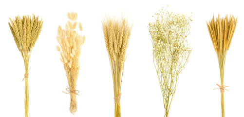 Set of dry flower bouquet isolated on white background. gramineae grass, bunny tail grass, wheat, gypsophila, Can be used to decorate your design.