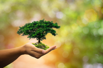 Human hands holding green plant over nature background.Saving world natural environment and sustainable ecosystem with tree planting on volunteer's hand. Environment. Ecology concept,copy space.