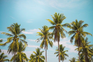 Coconut palm trees in sunny day - Tropical aloha summer beach holiday vacation concept
