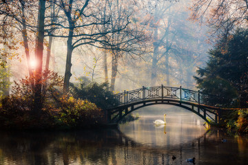 Scenic view of misty autumn landscape with beautiful old bridge with swan on pond in the garden with red maple foliage.