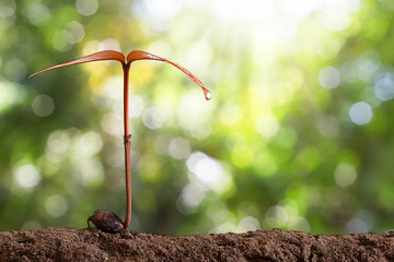 Growing sprout on blurred green bokeh background, environmental concept