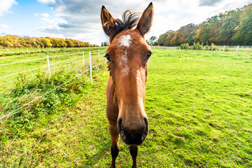 Young horse standing close on a green field