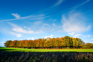Small forest in autumn colors on a green meadow