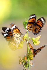 Closeup photo of a group of  amazing butterfly.