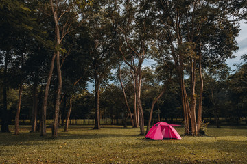 Camping and tent under the pine forest in sunset in Prachin buri, Thailand