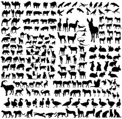 silhouette of the wild and domestic animals