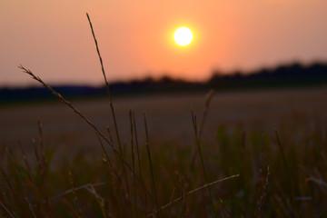 Weizen bei Sonnenuntergang