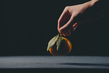 Female hand holding ripe orange clementine with green leave over the table, photographed in low light