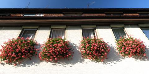 Fenster Blumen