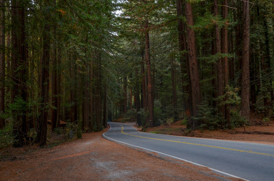 giant redwood trees along Lucas Valley Road Nicasio, Marin County, California