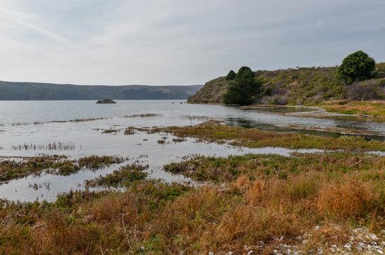 marshed coast of Tomales Bay Marshall, Marin County, California