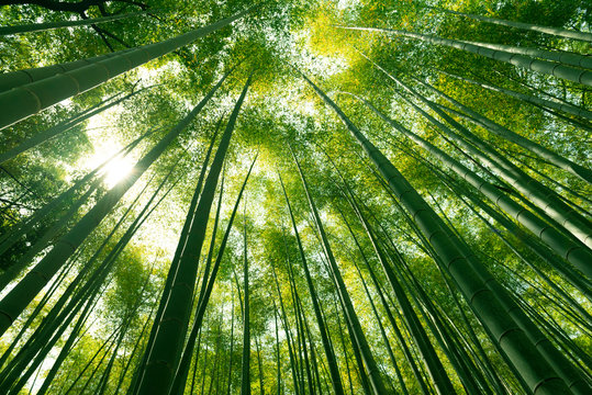 Arashiyama bamboo forest in Kyoto, Japan.