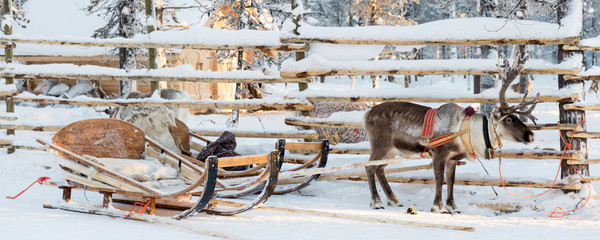 Reindeer sledge, in winter, Lapland, Finland