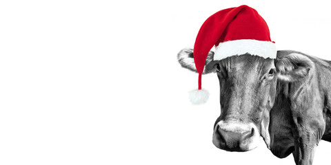 Black and white fun cow on white background with a Santa hat, Christmas greeting card
